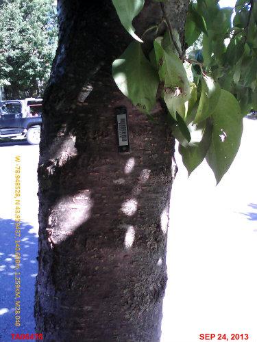A tagged tree